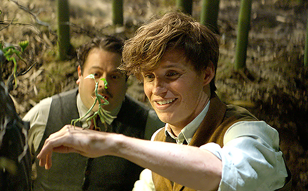 Fantastic Beasts and Where to Find Them (2016) DAN FOGLER as Jacob, EDDIE REDMAYNE as Newt and a Bowtruckle